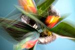 Still Flowers 01