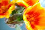 Still Flowers 02