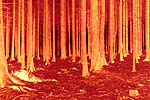 Waldstücke