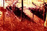 Waldstücke 01