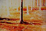 Waldstücke 03